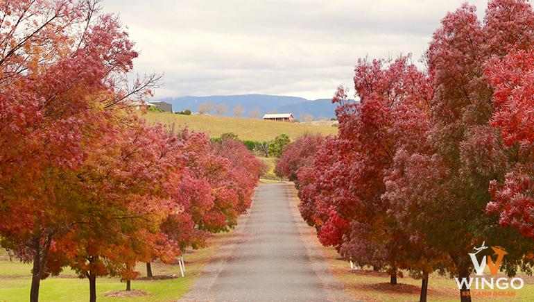 ngắm nhìn mùa thu xao xuyến và dịu dàng tại Úc